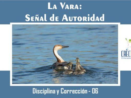 Protegido: Dyc06 La Vara: Señal de Autoridad